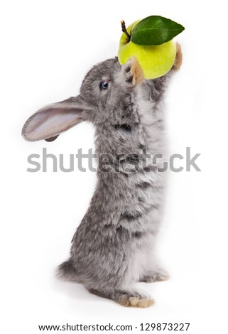 rabbit with apple isolated on white background