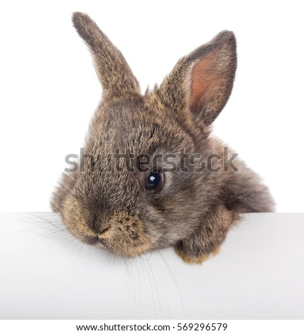 rabbit with blank billboard, isolated on white