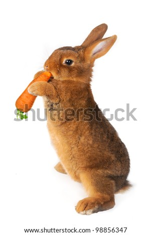 Rabbit with carrot in paws ���®n a white background
