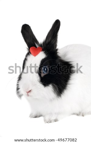 rabbit with red heart isolated - stock photo