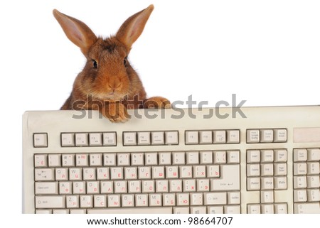 rabbit with the keyboard on a white background