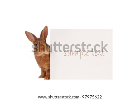Rabbit with with a white background for text drawing
