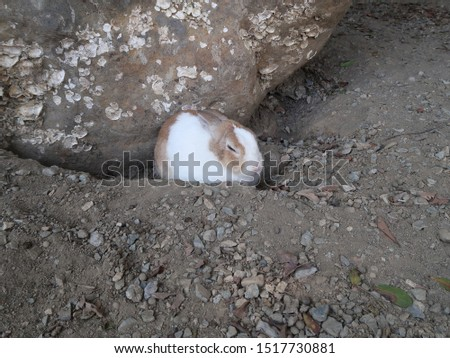 Rabbits are small mammals in the family Leporidae of the order Lagomorpha (along with the hare and the pika).