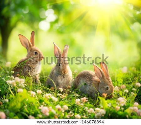 Rabbits Beauty