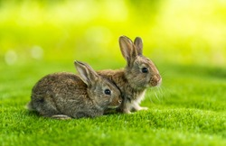 Rabbits. Cute little Easter bunny in the meadow. Green grass under the sunbeams. two rabbits on a green grass in summer day.
