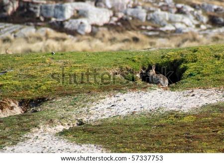 Rabbits hole