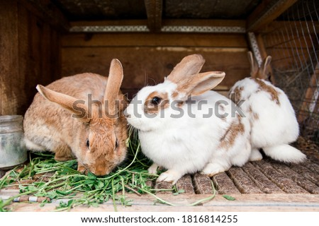 rabbits in a cage eat grass. rabbit cage. feeding rabbits.