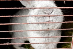Rabbits in a cage - white and black rabbit behind bars . High quality photo
