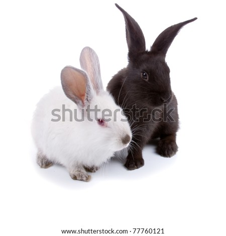 Rabbits isolated on a white background