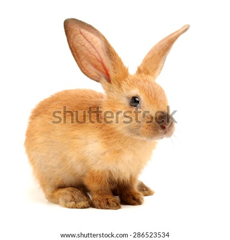 rabbits isolated on white background  #286523534
