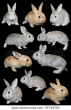 Rabbits the set on a black background, is isolated.