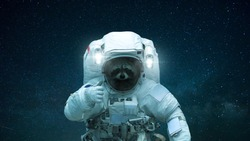 Raccoon in open space shows like. Space animal in a space suit on a background of a starry sky. Concept