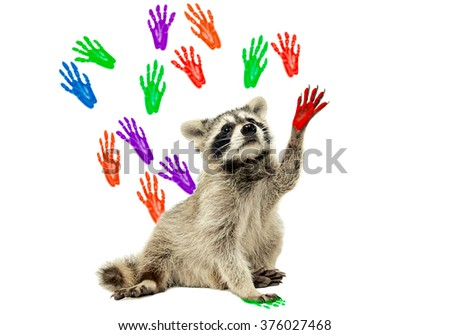 Raccoon sitting  on the background of handprints, isolated on white background