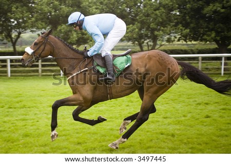 race horse - stock photo