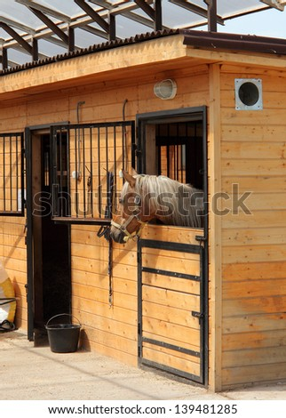 Race horse in stalls,   the head outside of the stable
