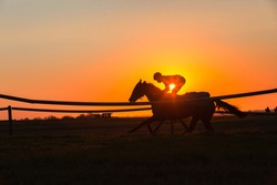 Race horse jockey rider training early dawn sunrise closeup running action silhouetted  a scenic color outdoors equestrian morning landscape.