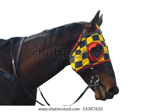 Race horse with checkered blinkers isolated with clipping path