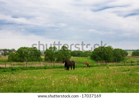 Race horses on a pasture in the afternoon