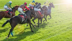 Race horses sprinting towards the finish line with sunlight lens flare effect