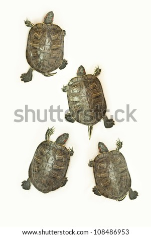 race of turtles