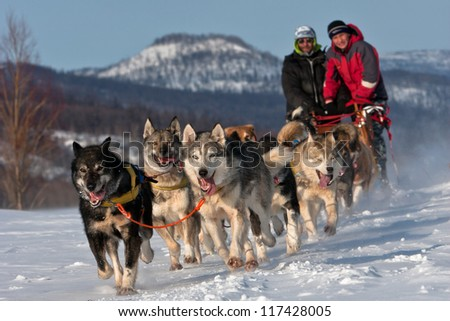 Race on a dog team in Russia on the peninsula of Kamchatka