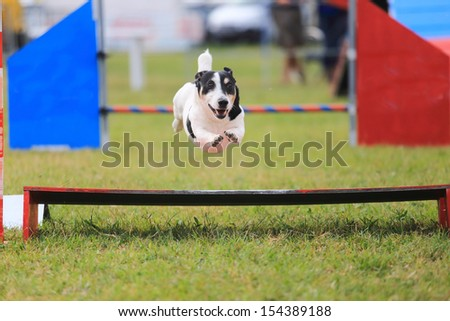 racing dog for agility