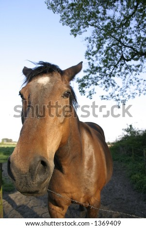 Racing horse - stock photo