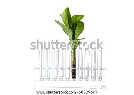 Rack with test tubes and plant isolated on white Stock photo ©
