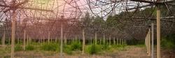 radio telescope array,  Radio Astrophysical Observatory. Antenna Array