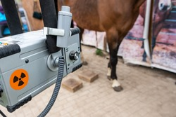 Radiographic x-ray imaging of the equine foot. The radiographic examination of the equine foot provide the veterinarian and farrier with a wealth of information.