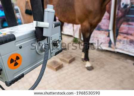 Radiographic x-ray imaging of the equine foot. The radiographic examination of the equine foot provide the veterinarian and farrier with a wealth of information. Stock photo ©