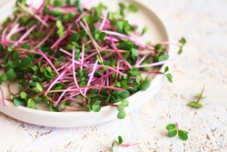 Radish microgreens. Sprouting Microgreens. Seed Germination at home. Vegan and healthy eating concept. Sprouted radish Seeds, Micro greens. Growing sprouts. Green living concept. Organic food.