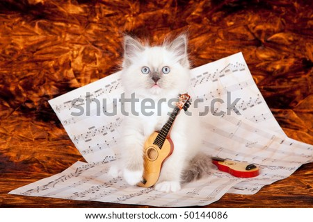 Ragdoll kitten with miniature harp and music sheets