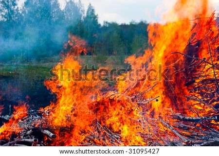 Raging fire of burning forest close-up