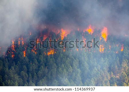 Raging pine tree fire across the hill