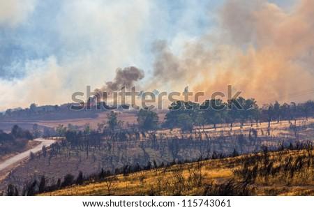 Raging pine tree fire across the hill