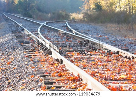rail road filled with autumn leaves