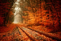 Railroad tracks through the woods in autumn.