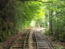 Railway Trail,Yakushima/Kagoshima,Japan