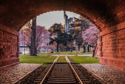 Railway tunnel with an old track through a park on the banks of the Main. Frankfurt skyline with skyscrapers in the background in the evening. Violet blossoming trees and lawn
