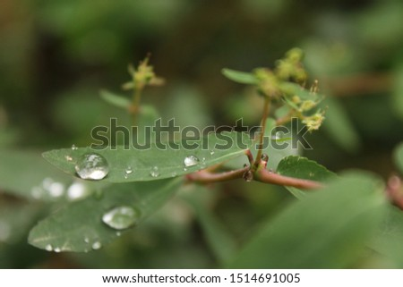 rain affect background beautiful closeup