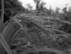 rain afterrain closeup macro blackandwhite