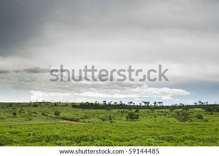 Rain clouds above manioc plantation on southern Brazil.