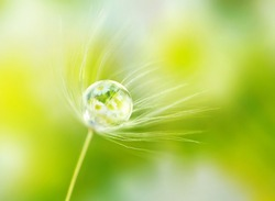 Rain drop dew water on a dandelion seed in the wind  with reflection of flowers daisies on a meadow outdoors spring macro summer with soft focus.  Amazing delicate fresh air artistic image