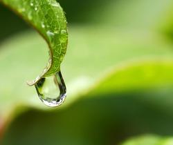 Rain drop on a leaf close up