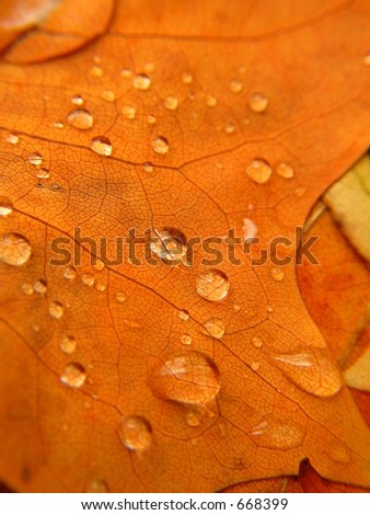 Rain drops on an autumn leaf