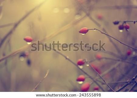 rain drops on red berries