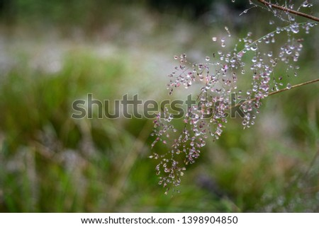 Rain drops on some grass during a storm in Scotland on the West Highland Way National Trail. #1398904850