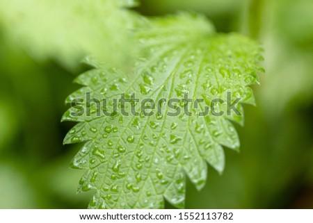 Rain drops on the leaf; green leaf with drops; rain drops #1552113782