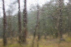 Rain Drops On Window Glass Forest Curonian Spit National Park Abstract Background